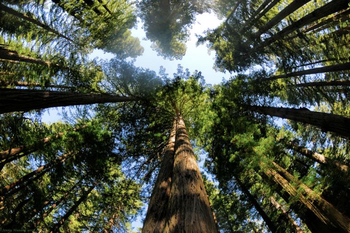 redwood california national park